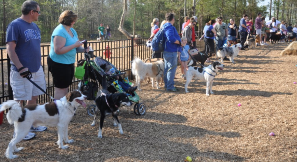 Image of Dog Park